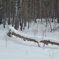 Шлагбаум. Лесной. После снегопада. :: Михаил Полыгалов