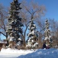 В зимнем парке :: Лидия Бараблина