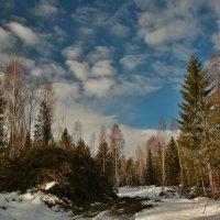 Весна...валят лес :: liudmila drake