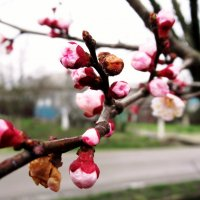 Весна...  Такая разная.... :: Вячеслав Медведев