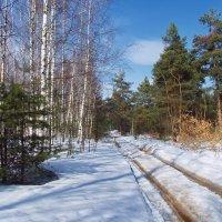 Весны лесная колея... :: Лесо-Вед (Баранов)