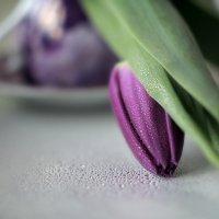 Тюльпан :: Lusi Almaz