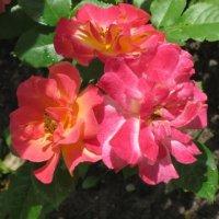 Необычные цветы :: Дмитрий Никитин