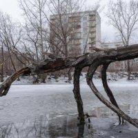 Медленное движение :: Валерий Михмель