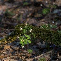 Весна из Кайлъка, Плевен ! :: Вен Гъновски