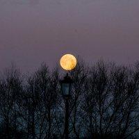 луна :: navalon M