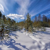 Не уходит зима, не сдается, снегопадом окутала март. :: vladimir Bormotov