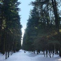 Последний день марта в Ржевском лесопарке :: Елена Павлова (Смолова)