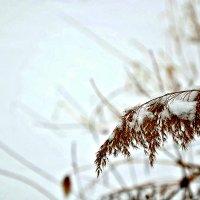 Холодно, а завтра апрель. :: Михаил Столяров