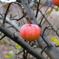 Осенний плод. :: Владимир Усачёв
