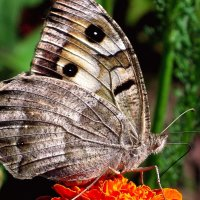С глазами на крыльях!... :: Лидия Бараблина