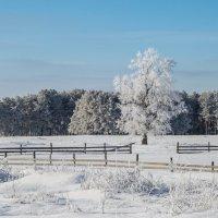 Зима :: ирина лузгина
