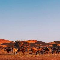 В закатных лучах(после трудового дня)...Мерзуга.Марокко! :: Александр Вивчарик