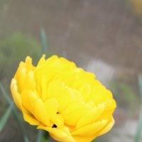 Просто цветочек :: Евгений Шувалов