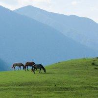 В долине Чулышмана :: Валерий Михмель