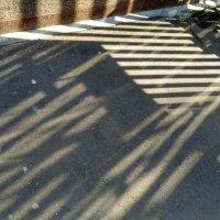 Солнечное настроение :: Tanja Gerster