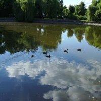 Пруд   в   Ивано - Франковском   парке :: Андрей  Васильевич Коляскин