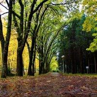 Осень в парке :: Михаил Сипатов