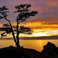 Хужир. Дерево желаний на закате :: Сергей Никитин
