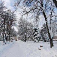 Зимний парк :: Роман Савоцкий
