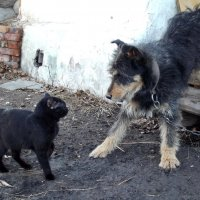 А ну, пропусти меня домой! :: Светлана Рябова-Шатунова