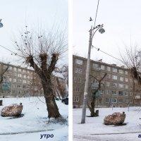 Прогулки в поисках Метафизики :: Галина Щербакова