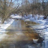 Spring in Lėvuo river 2 (Karsakiškis, Lithuania) :: silvestras gaiziunas gaiziunas