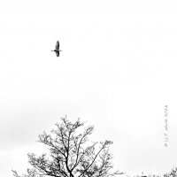 Белая цапля. :: Liudmila LLF