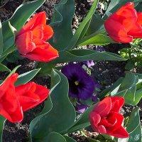 Цветы 2 :: Валерий Дворников