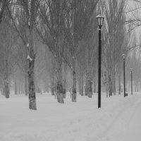 Парк :: Павел Кореньков