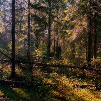 В  лесной  чаще :: Михаил (***NeonfrozeD***)
