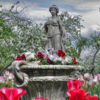 Цветение в Коломенском :: Евгения Photolife