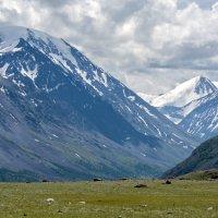 Южно-Чуйский хребет :: Валерий Михмель