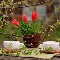 Первое чаепитие в весеннем саду... :: Ольга Гукова (Olka-rada5)