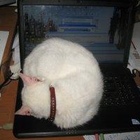 Сканирование фейков в Интернете... :: Алекс Аро Аро