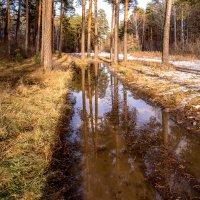 лесными дорогами :: Василий И Иваненко