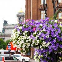 Петроградские цветочки :: kondratissimo