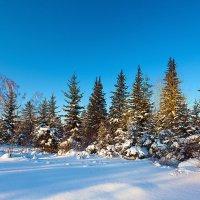 Зимний лес :: Анатолий Иргл