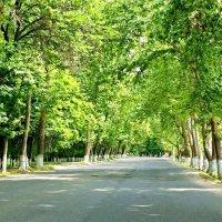Обычная городская улочка :: Mir-Tash