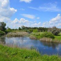 река Сухая. :: Виктор