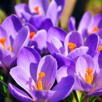 Яркая весна. :: Марина