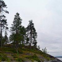 Скалистые острова :: Ольга