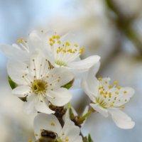 Весна... :: Геннадий Титов