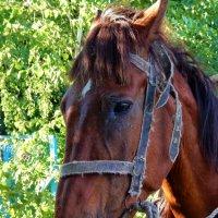 Дина деревенская лошадка :: Валентина Пирогова