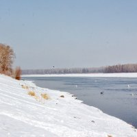 Река Бия и лебеди. :: Олег Афанасьевич Сергеев