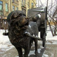 Барабанные собаки :: Сергей Карачин