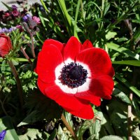 Аленький цветочек апреля.... :: Galina Dzubina