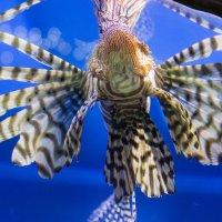 Рыбка :: Mariya Zazerkalnaya
