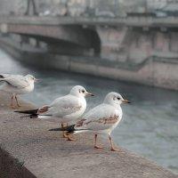 Парижанки :: alteragen Абанин Г.