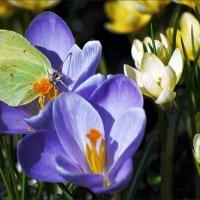 Весна... :: Андрей Медведев